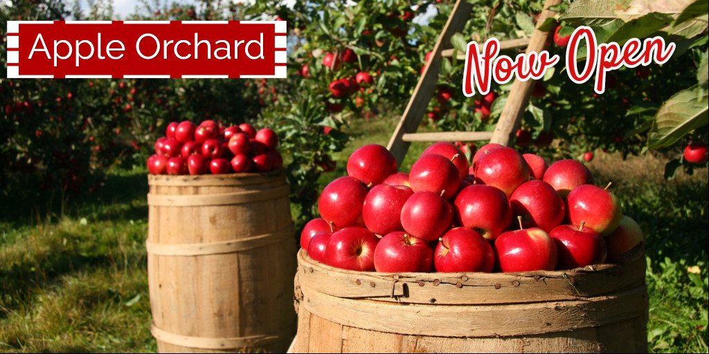 Apple Orchard - Now Open