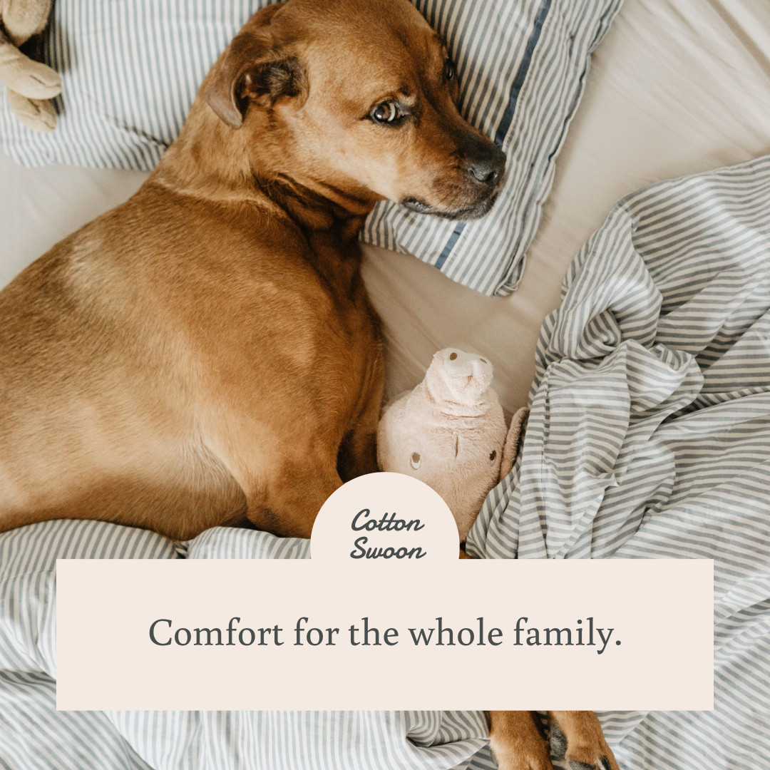 Instagram photo template for a pet bedding store