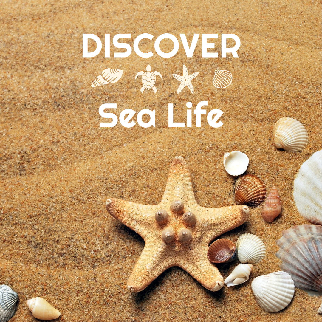 Discovering sea life