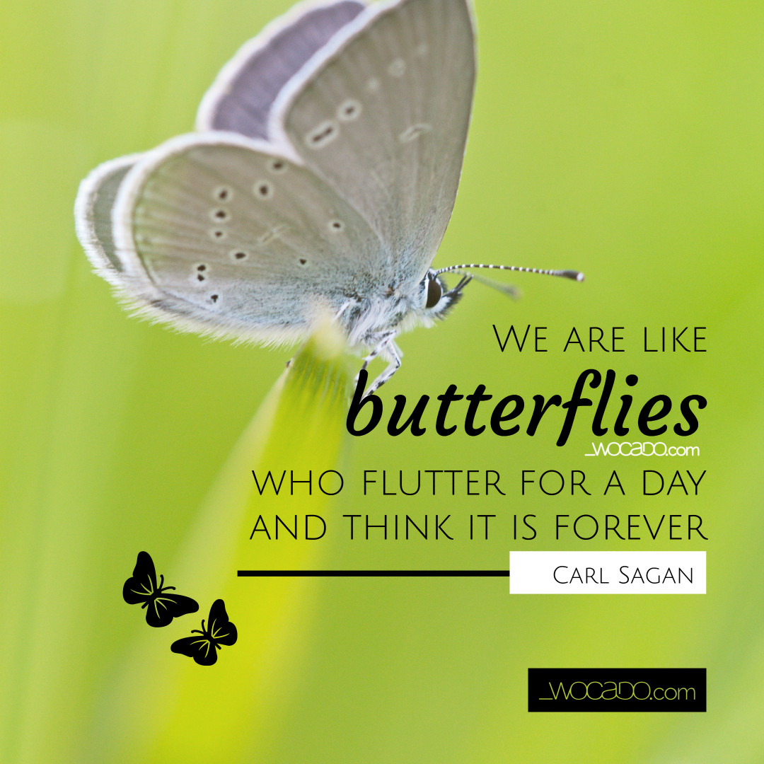 We Are Like Butterflies Carl Sagan Quote Bltmy