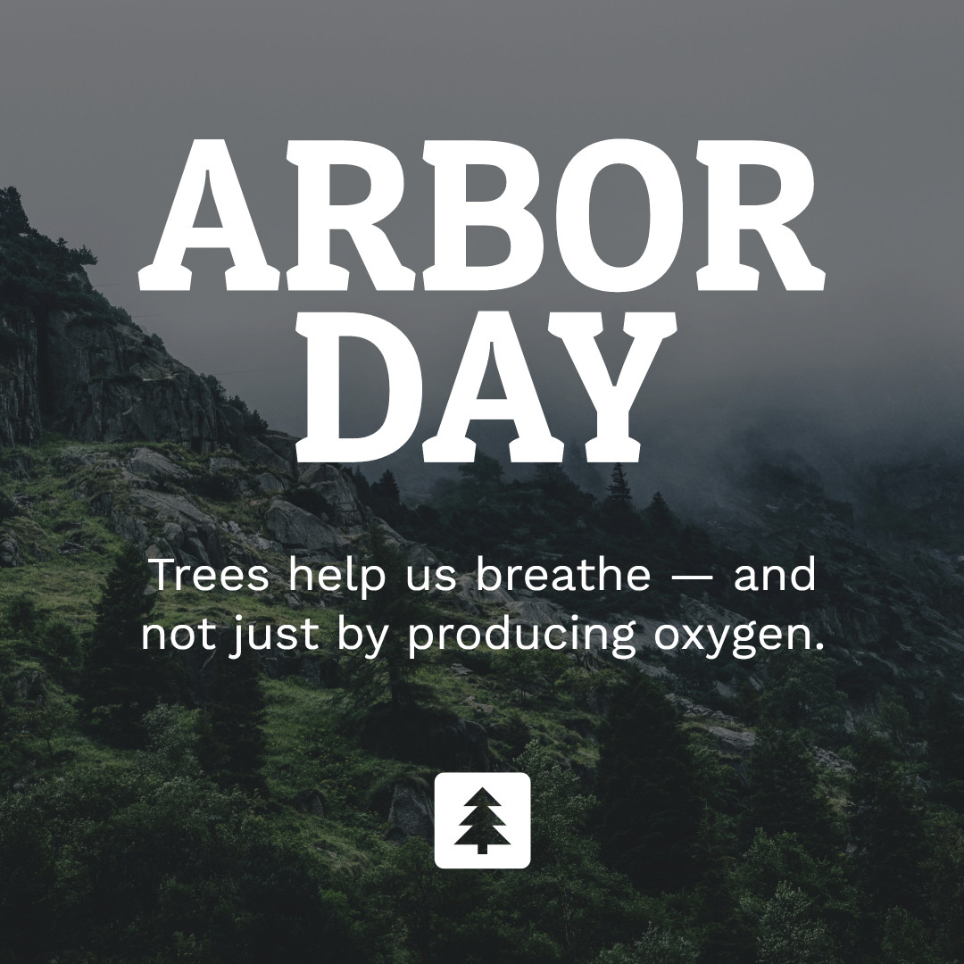 Trees help us breathe