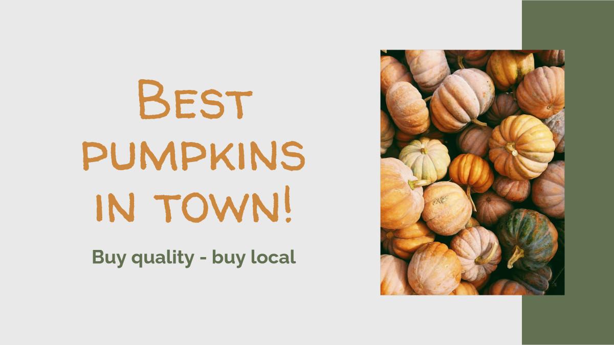 Best pumpkins in town