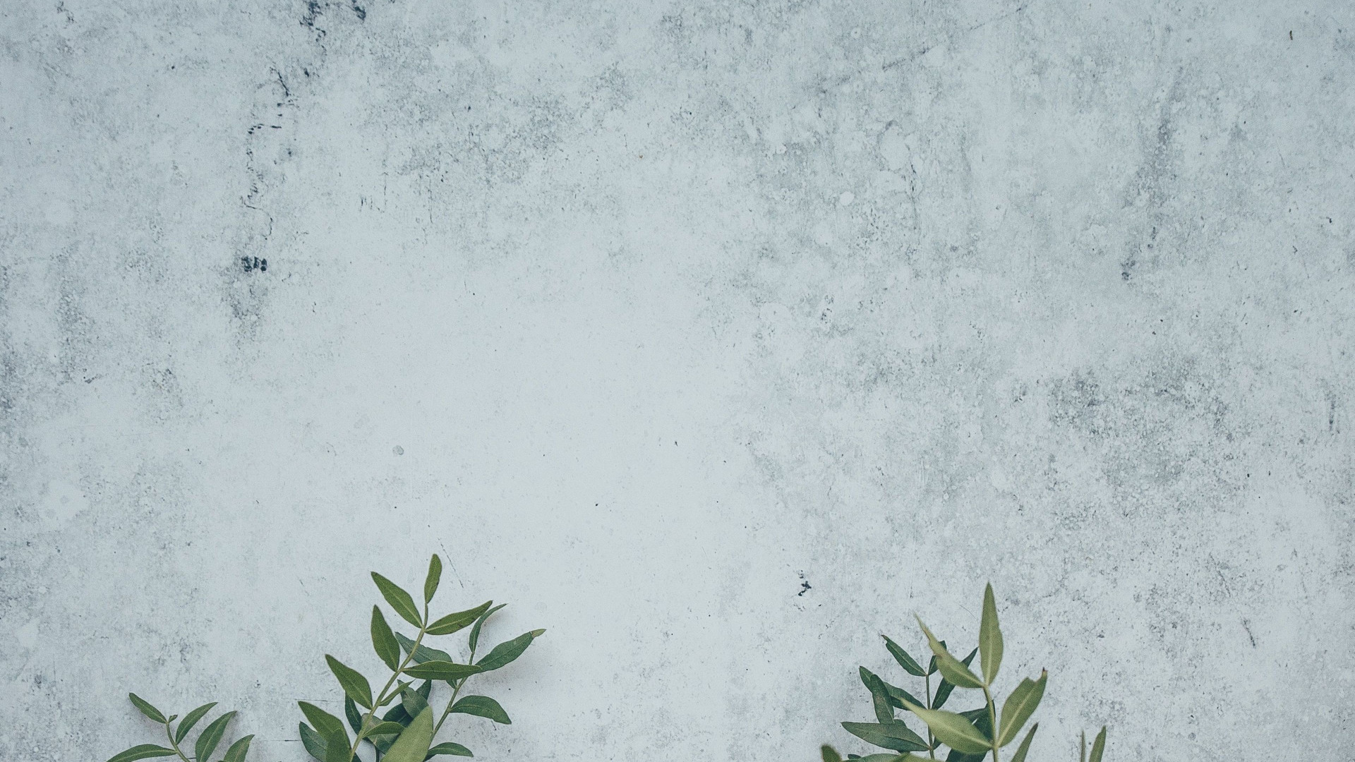 Wall Leaves - Zoom Virtual Background