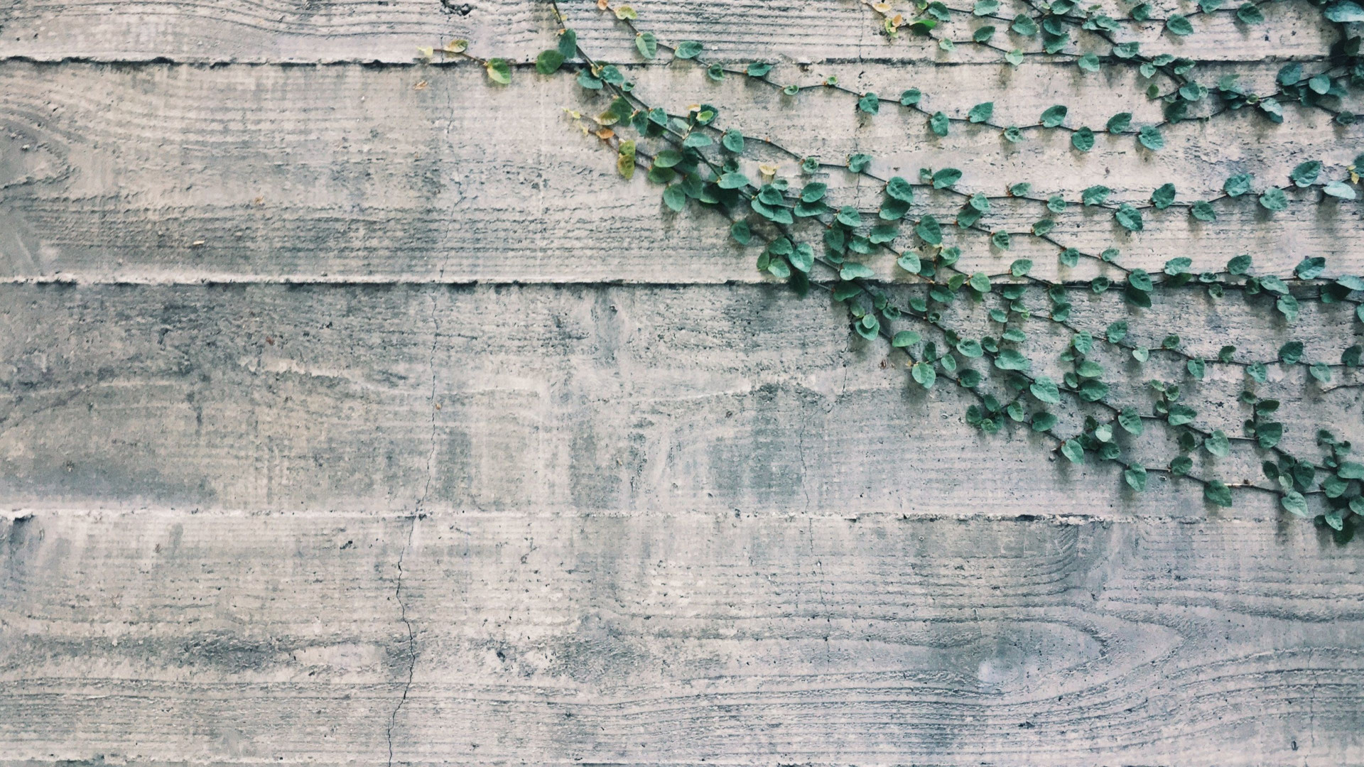Wood Vines - Zoom Virtual Background
