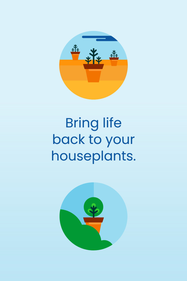 Bring life back to your houseplants
