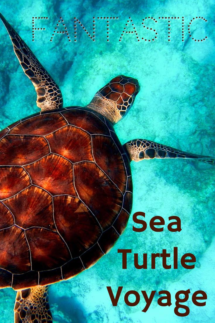 Fantastic sea turtle voyage