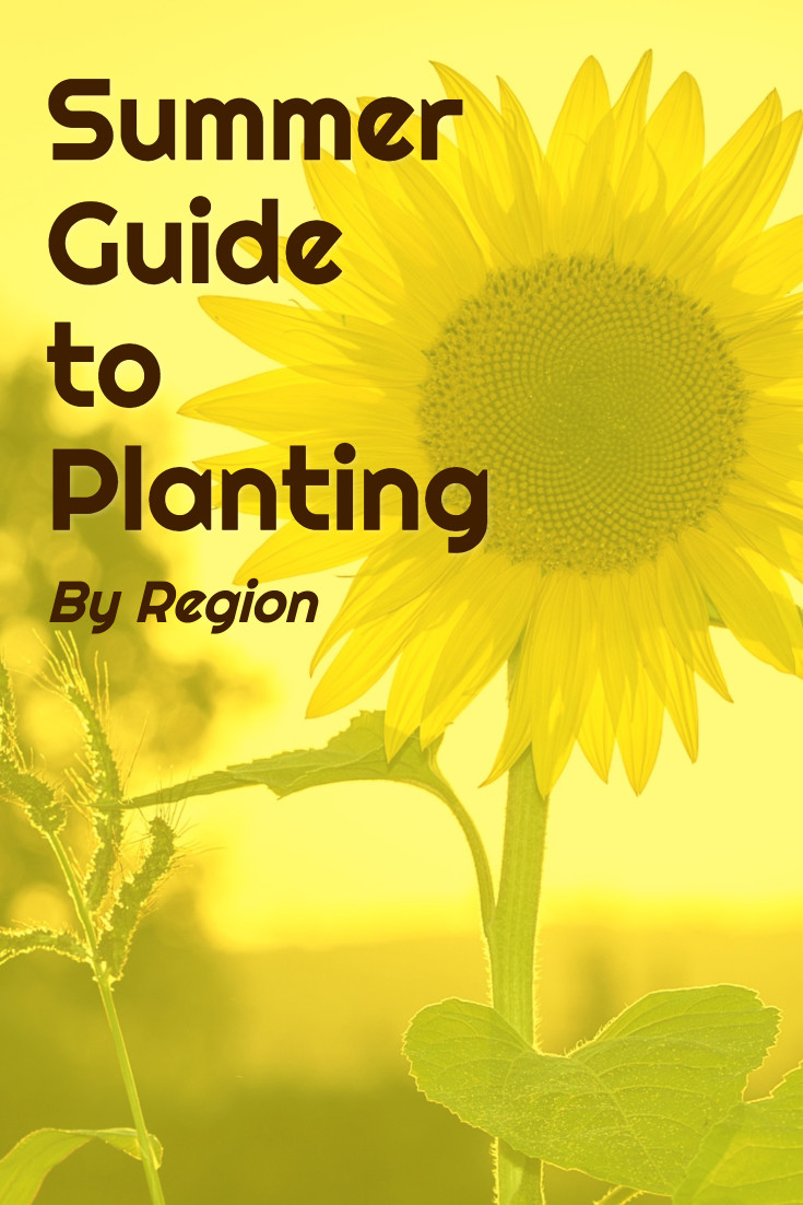 Summer guide to planting