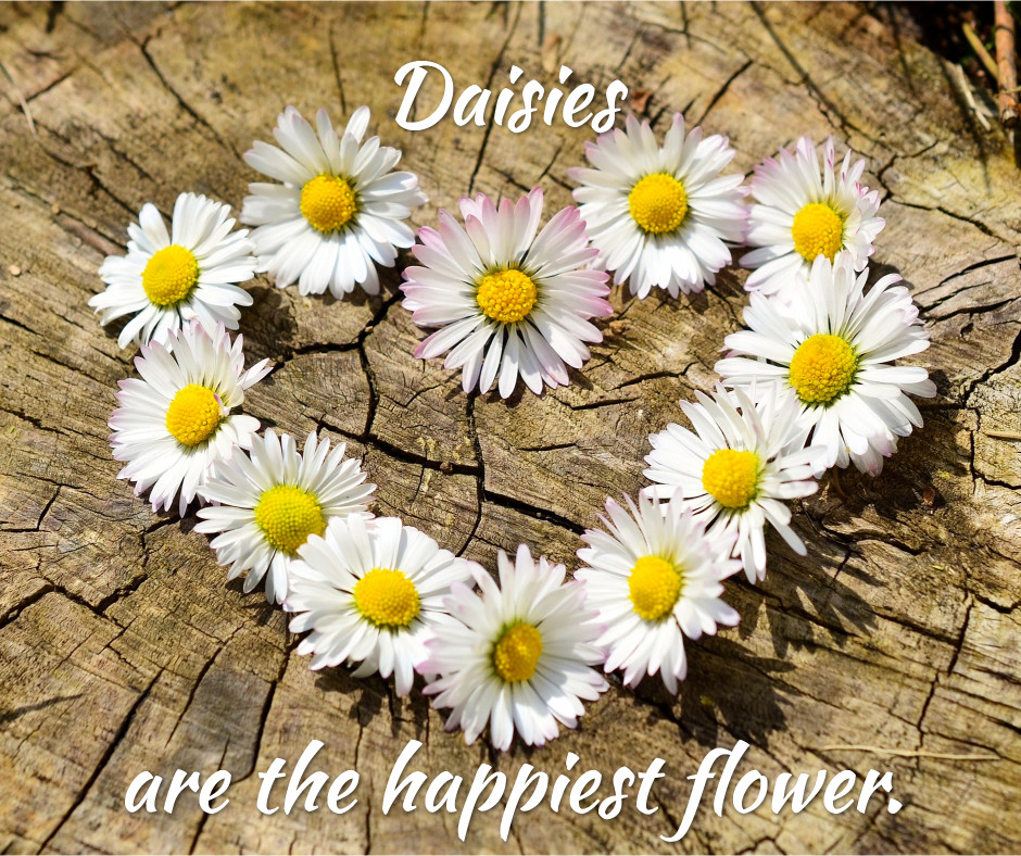 Daisies are the happiest flower