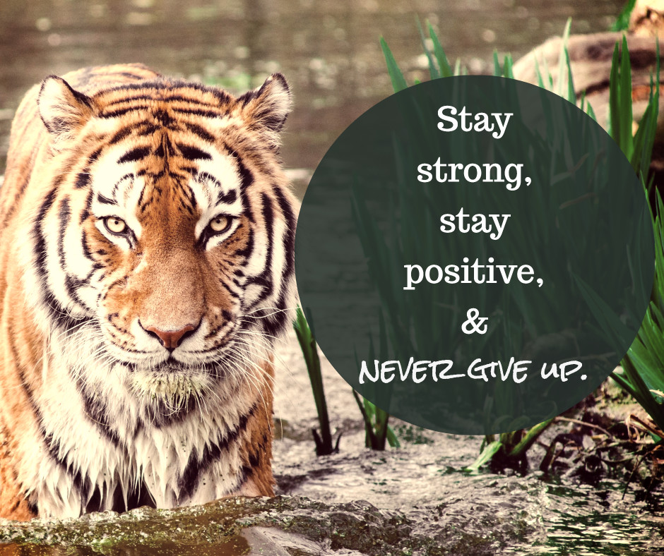Stay strong & never give up