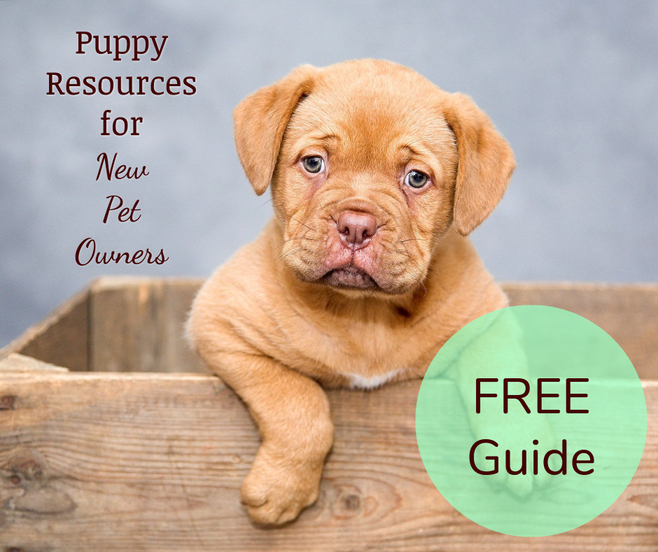 Guide for puppy resources