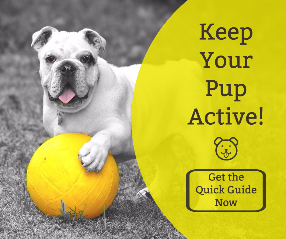 Keep your pup active