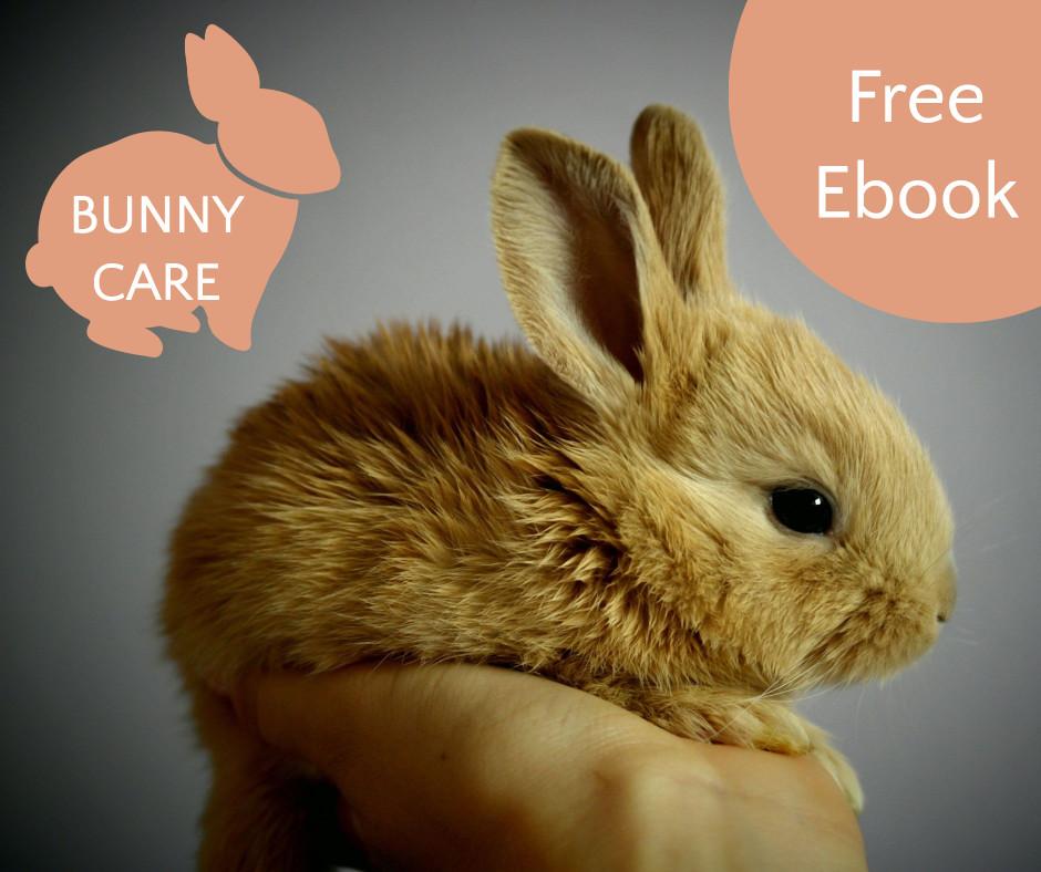 Bunny care - free ebook